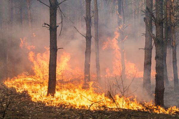 ปัญหาไฟป่าที่ทวีความรุนแรงขึ้นในรอบ 10 ปีที่ผ่านมา